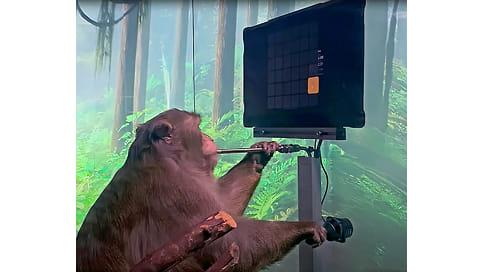 Макак играет мозгом  / Стартап Илона Маска вживил обезьяне чип