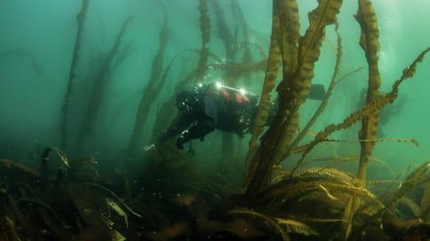 Подводная защита климата  / Водорослевые луга — важная часть углеводородного баланса в мире