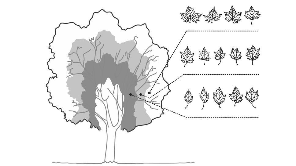Как современные растения помогают классифицировать окаменелости