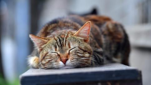 Полезно и детям, и котам // Питомцы из приюта хорошо адаптируются к хозяевам-аутистам