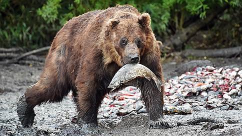ФСБ предлагает считать медведей стратегическими ресурсами