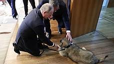 Президент Сербии подарил Владимиру Путину собаку