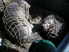 Эти пойманные щенки тюленя только что поступили на службу