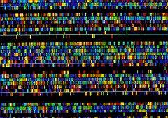 Самое амбициозное исследование в современной генетике — расшифровка человеческого генома — продолжалось более 10 лет (на фото — последовательность ДНК человека, выведенная на экран компьютера в виде разноцветных элементов)