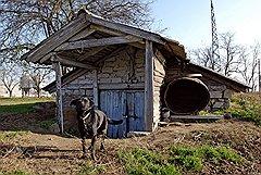 Пес Берия охраняет подвал, в котором маркиз проводит опыты по производству коньяка