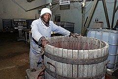 Умпуа Каэтану — единственный непьющий рабочий в виноградарском хозяйстве