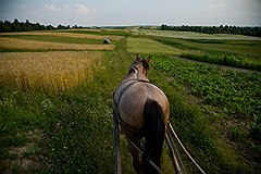 Лошадь в Залесцах — главный транспорт