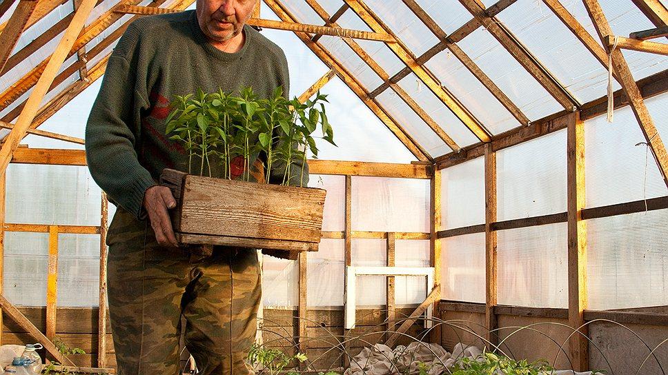 Не только отечественные садоводы, но и целые агрофирмы сегодня пользуются иностранными семенами