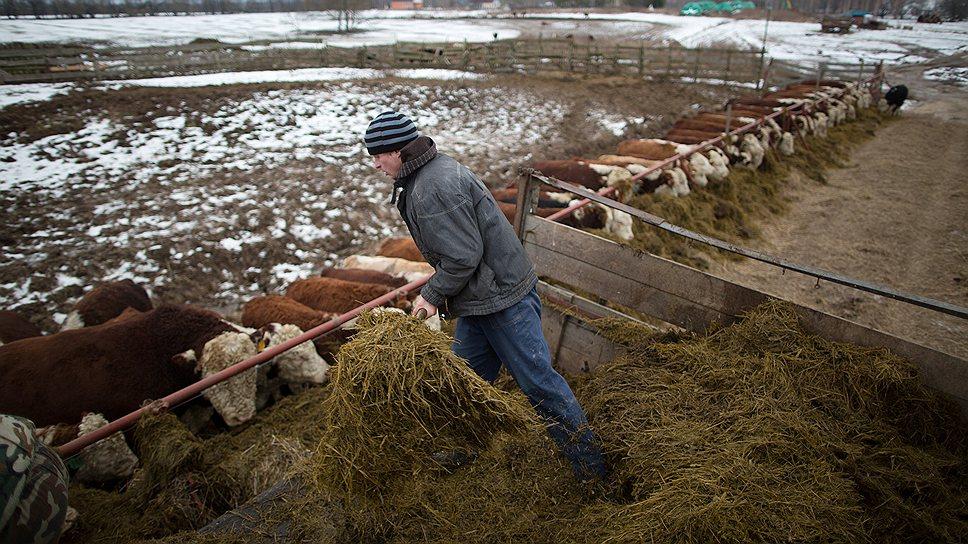 В будущем фермер надеется все делать с зятем, без наемных рабочих