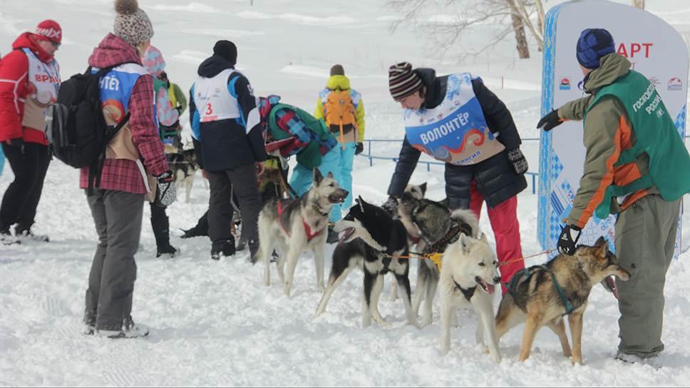 """Многие волонтеры, приехавшие на старт """"Берингии"""", живут в отдаленных регионах Камчатки"""