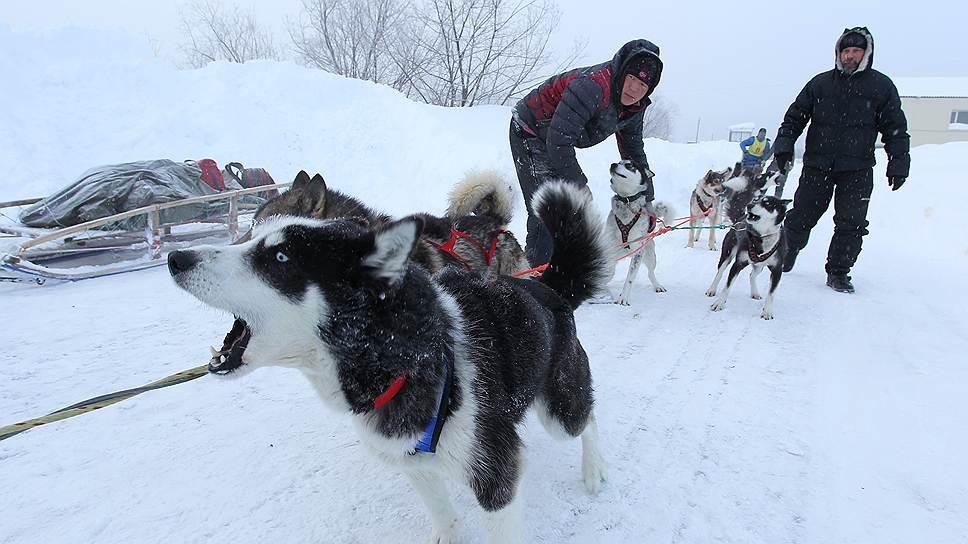 """Участники """"Берингии-2014"""" уже преодолели несколько сот километров. Собака лает, а упряжка идет"""