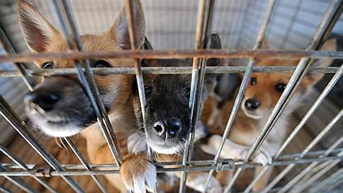 Собаки высокого полета