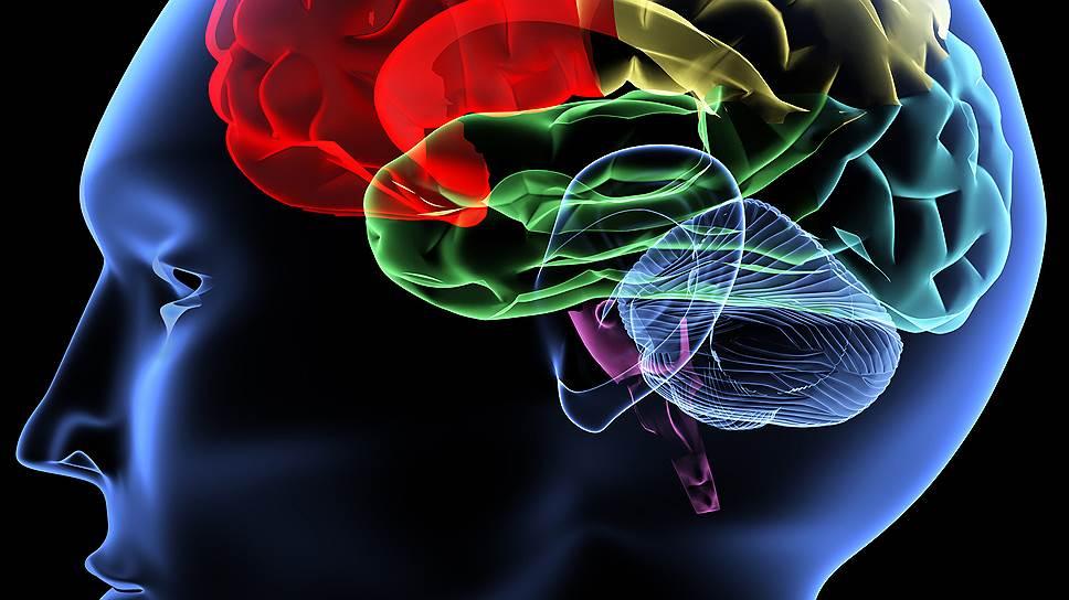 Ученые пытаются создать модель, в которую будет заложено все, что мы знаем о работе мозга