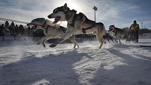 Бегущие по снегам  / Фоторепортаж Александра Миридонова о крупнейших гонках собачьих упряжек «Берингия»