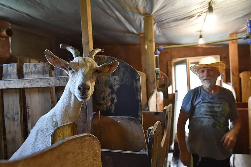 Альпийских коз Юрия Карамзина в селе называют летающими -- у них очень длинные уши