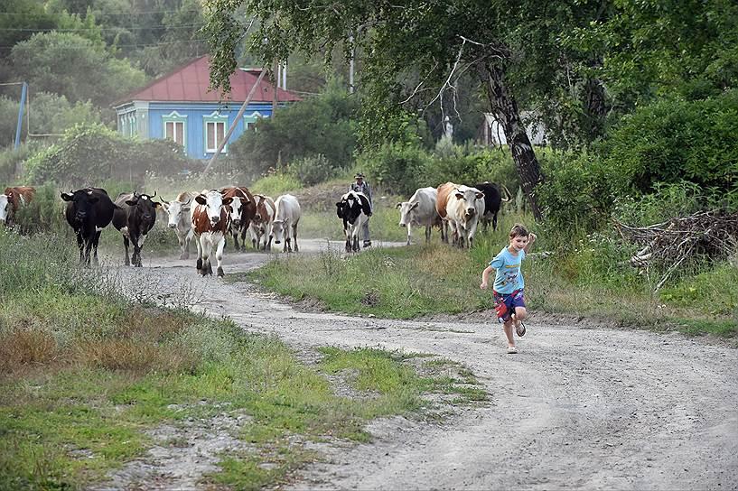 Вечернее возвращение коров с выпаса -- развлечение для детей