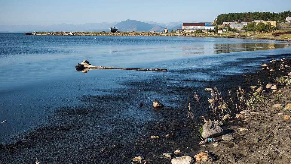 Август 2016-го: водоросль спирогира превратила берег у Северобайкальска в болото