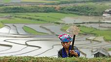 """Оказывается, жители """"рисовых"""" стран более склонны к коллективизму и меньшие индивидуалисты"""