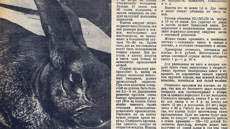 """В 1932 году """"Огонек"""" сообщал о начале нового соцсоревнования: рабочих призывали заниматься кролиководством. Ведь кролик— это не только ценный мех, но и 3-4килограмма диетического, легкоусвояемого мяса"""