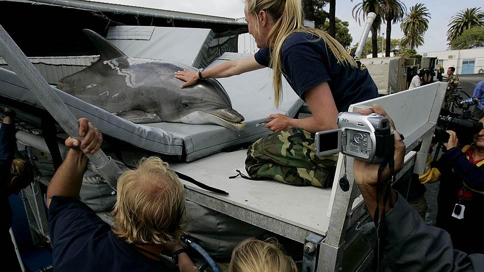 """Тренер успокаивает дельфина в ходе транспортировки на базу в Калифорнии. ВСША до сих пор действует """"Программа морских млекопитающих ВМФ"""""""