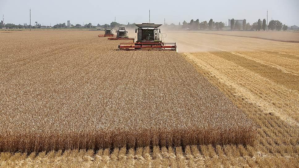 Почему рост экспорта пшеницы не радует сельхозпроизводителей