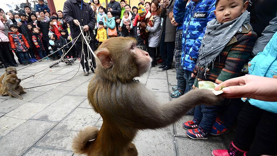 К деньгам и люди, и обезьяны относятся примерно одинаково: и те, и другие знают, что их можно обменять на удовольствия