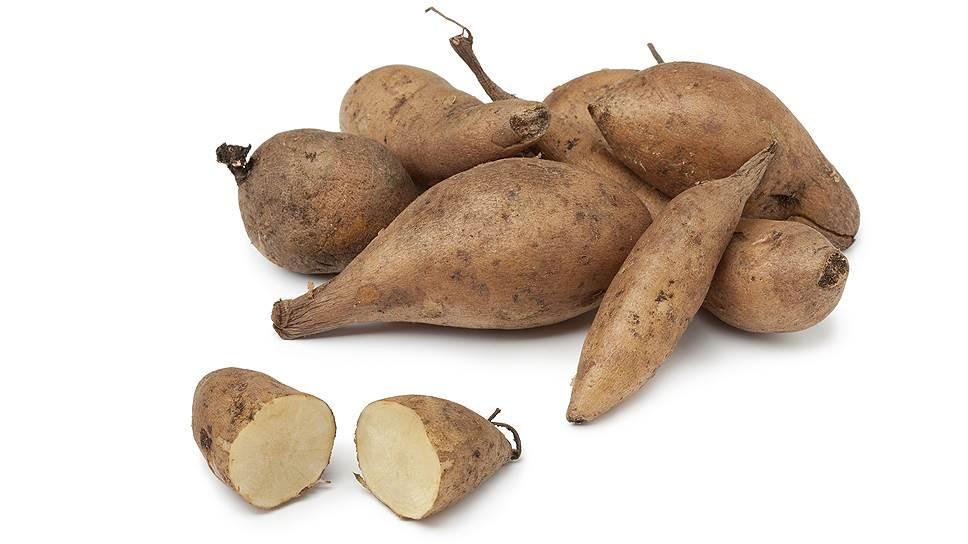 Якон — овощ со сладкими хрустящими корнями — считается одним из самых ценных для человека растений