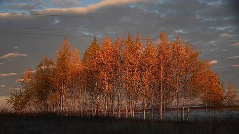 Полный багрец  / Наталья Радулова и Анатолий Жданов понаблюдали за тем, как зарабатывают на болдинской осени