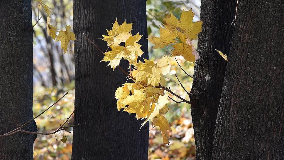 «Октябрь уж наступил — уж роща отряхает/ Последние листы с нагих своих ветвей»