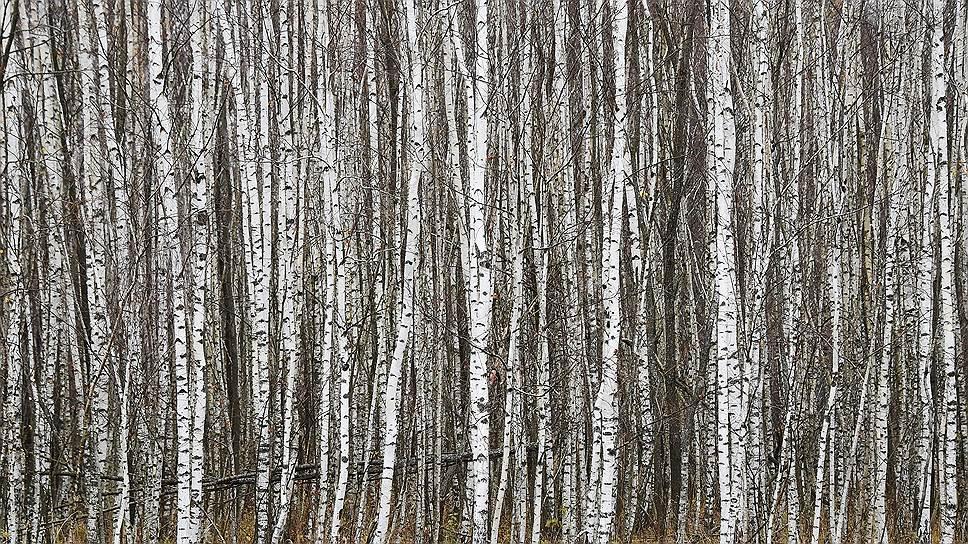 Природа в тургеневских местах по-прежнему потрясающая