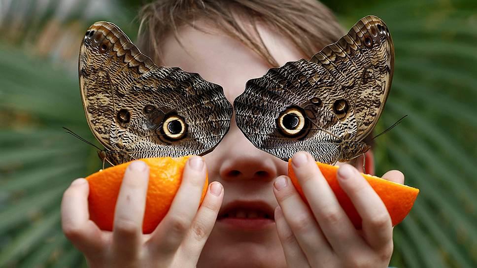 Грозит ли вымирание насекомым