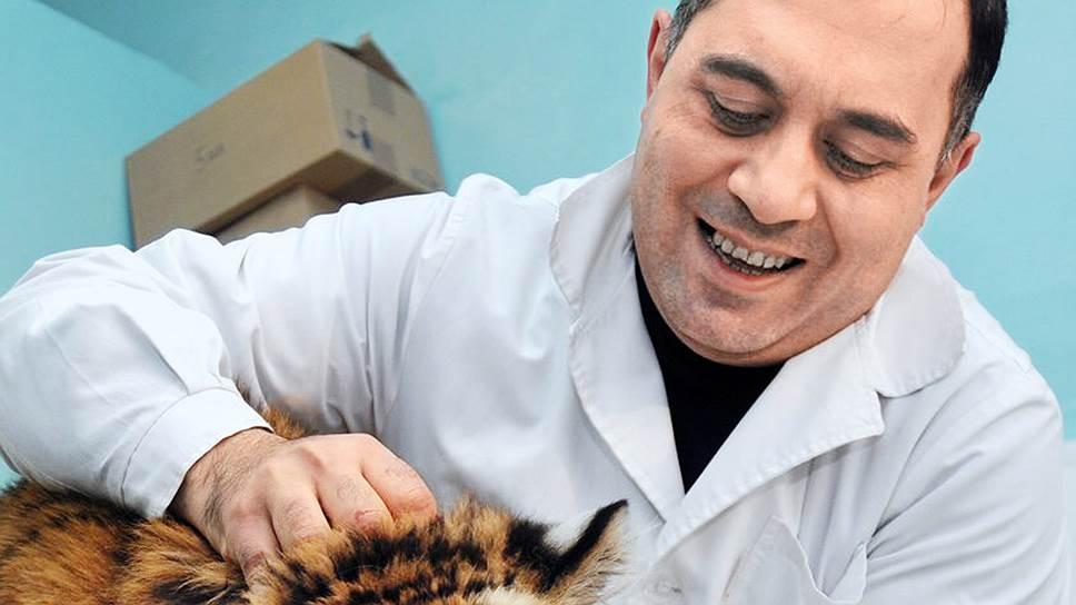 Чтобы вылечить тигра Жорика, ветеринару Карену Даллакяну пришлось выкупить его из цирка