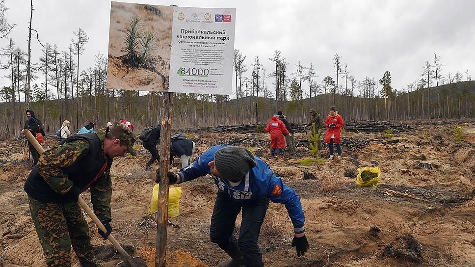 Информационный стенд сообщает, что скоро на месте пепелища поднимется новый лес