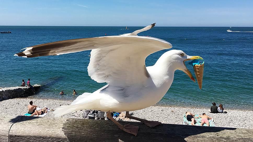 Чайка, укравшая мороженое, на пляже города Этрета