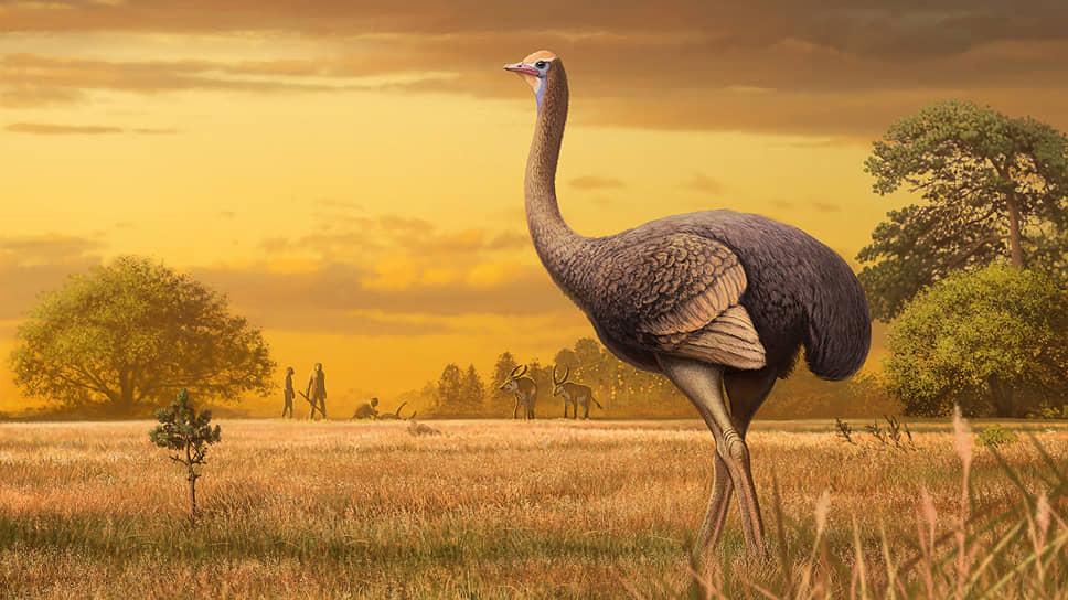 Художественная реконструкция пахиструтио не дает полного представления о гигантской птице, признают палеонотологи