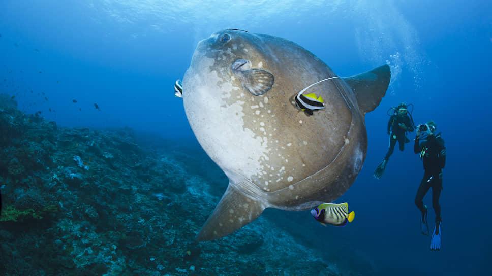 Чего ждать человечеству от океанских глубин