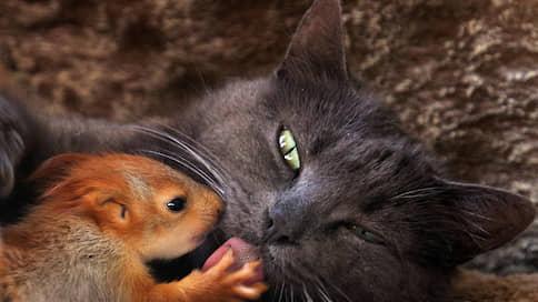В переводе на человеческий  / Как общаются звери, птицы и насекомые