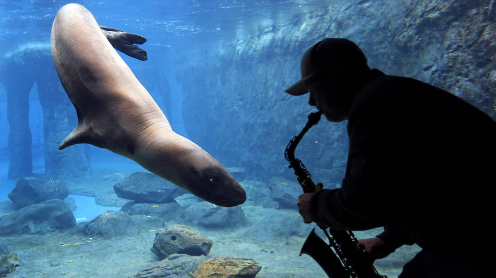 Морские млекопитающие до сих пор остаются загадкой для зоолингвистов