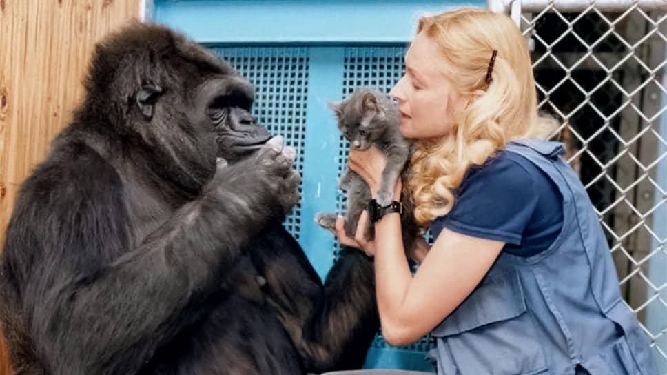 Горилла Коко, самая «говорящая» обезьяна из всех известных, любила поболтать с воспитателями и обожала кошек