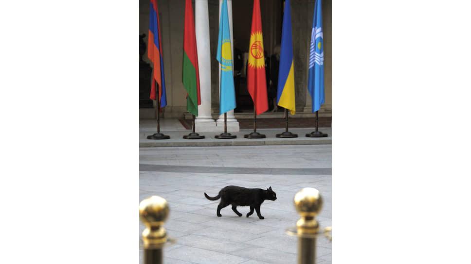 Черная кошка, конечно же, ни при чем. Но самый первый опыт интеграции на постсоветском пространстве — СНГ — не стал самым удачным и продвинутым