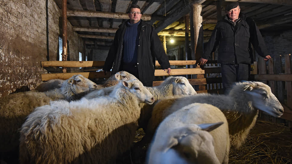 Валентин и Алексей Дубенцы, в прошлом дальнобойщики, переехали в Псковскую область 30 лет назад, занимаются овцеводством
