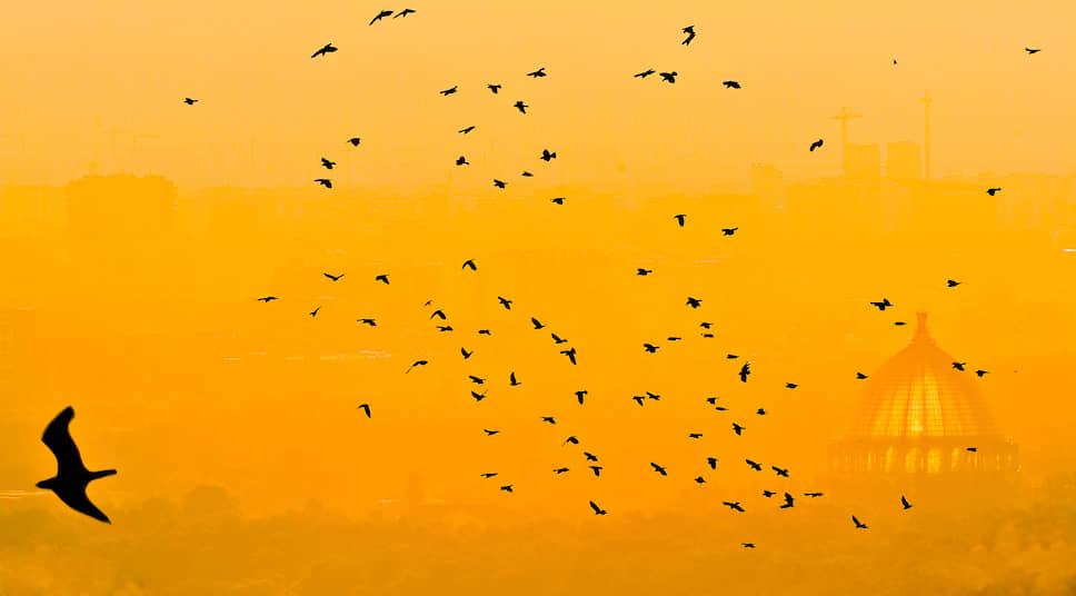 Птицы на рассвете на фоне павильона «Космос» на ВДНХ