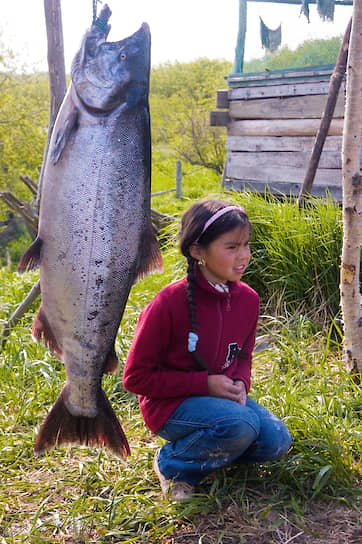 Сейчас у ительменов время корюшки, потом пойдут горбуша, нерка, кета, семга и кижуч. Их будут ловить почти все лето до середины сентября <br> На фото: чавыча — самая крупная рыба из лососевых