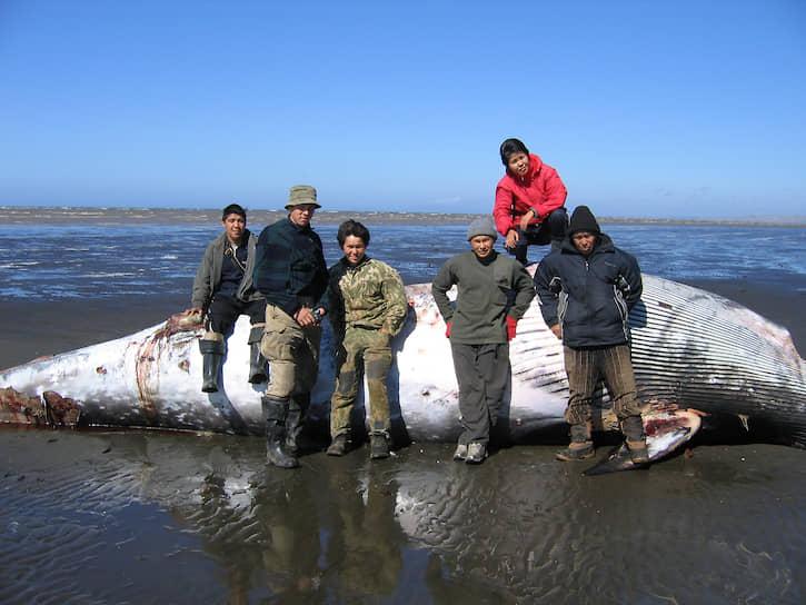 Кит выбросился на берег, а значит, будет много мяса для собак. Что-то достанется и медведям