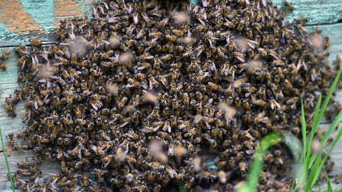 Пчеловечество в опасности  / Мед неправильный, пасеки на грани выживания