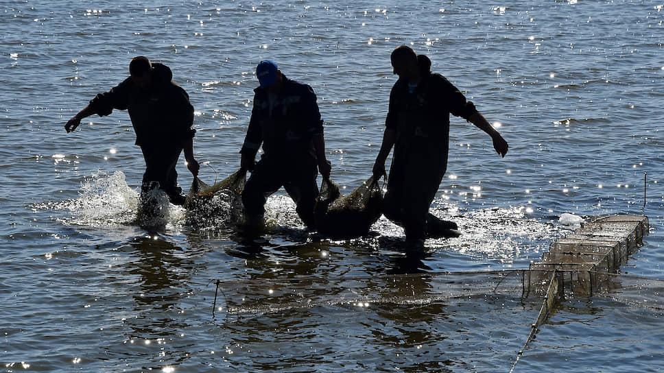 Для разведения креветок подходит морская вода