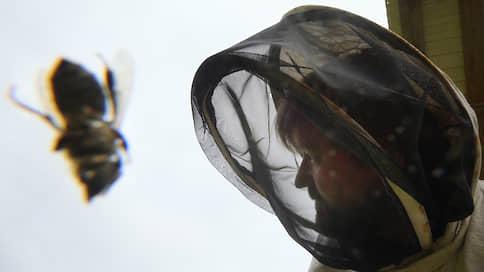 Колодный расчет  / Почему России нужны злые пчелы