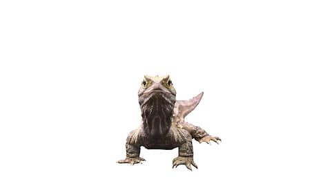 Новозеландская гаттерия, рептилия  / Выжившая
