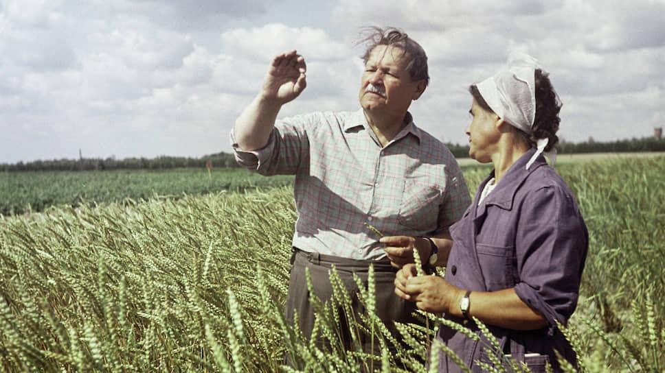 Как погибла уникальная многолетняя пшеница