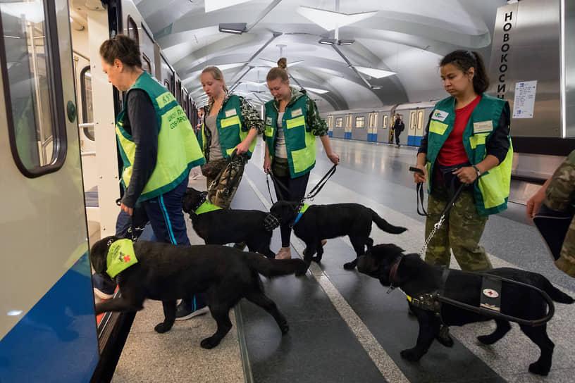 Кинологи во время тренировки собак-проводников для слепых на станции «Новокосино» Калининской линии